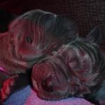 PuppiesBijOnsThuis_IMG_1275