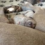 PuppiesBijOnsThuis_IMG_1359