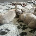 PuppiesBijOnsThuis_P1040333