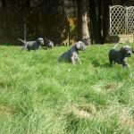PuppiesBijOnsThuis_P1040769