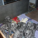 PuppiesBijOnsThuis_P1040872
