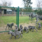 PuppiesBijOnsThuis_P1050154