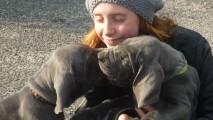 http://vanapenstad.be/wp-content/uploads/2013/08/PuppiesBijOnsThuis_P1050177-213x120.jpg