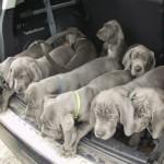 PuppiesBijOnsThuis_mee weg